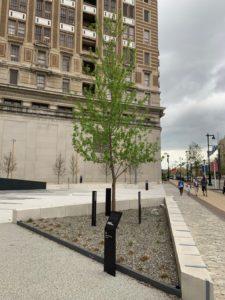 A maple tree at the Horwitz-Wasserman Holocaust Memorial Plaza