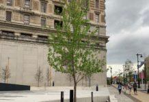Tree at Holocaust Memorial Plaza