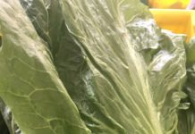 Virtus radicchio, a lettuce-looking vegetable