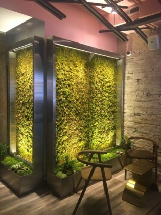 A moss covered wall inside Bloomsday