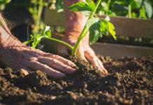 hands plant a sapling