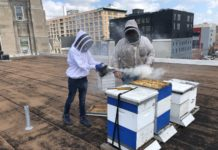 Arthur LaBan and Don Shump use smoke to calm bees
