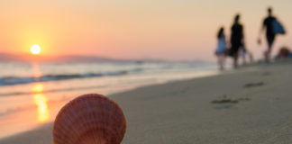 a seashell on the beach with a family walking away in the distance
