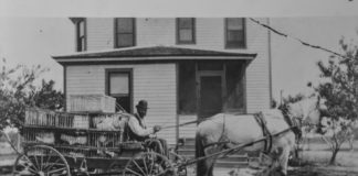 An Alliance Colony settler transports chickens with a horse-drawn carriage