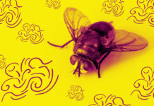 a fly on a yellow surface