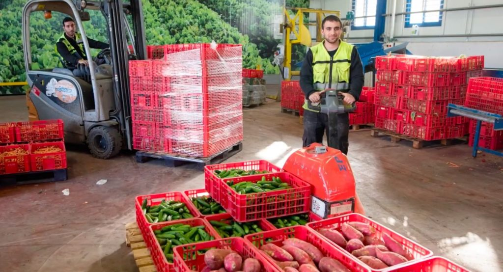 man with a pallet of tomatoes