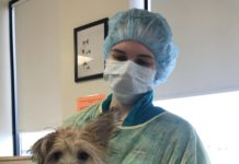 vet tech Molly with clinic patient Charlie